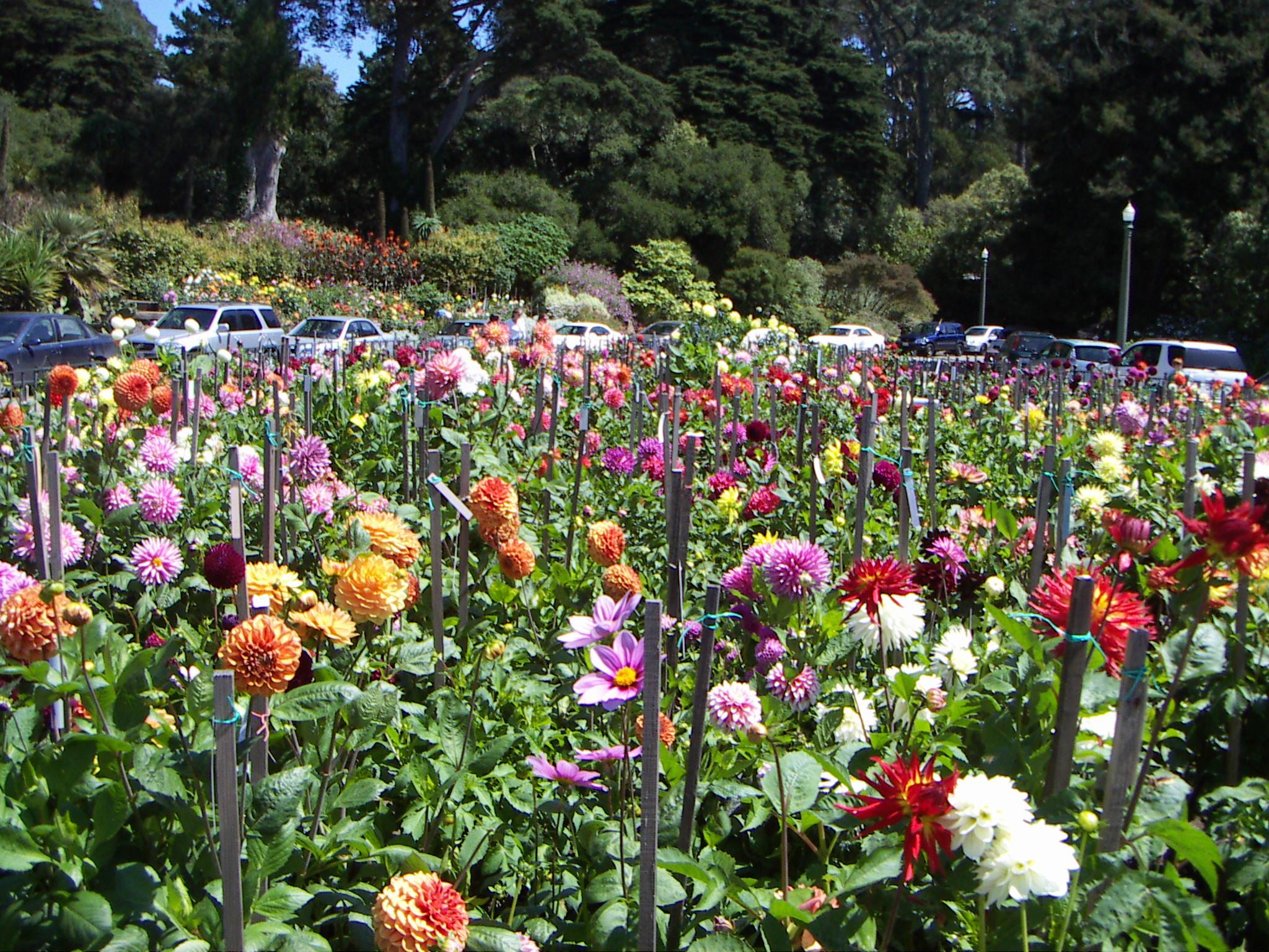 Flaurel Laurel tours the gardens of Golden Gate Park ...
